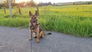 Family Protection dogs in Canada
