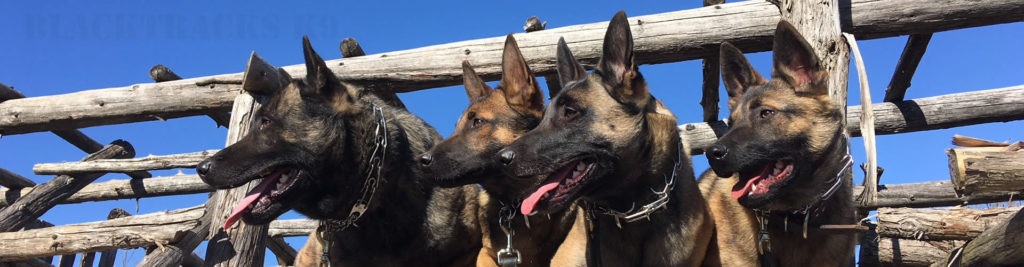 Family Protection dogs ontario